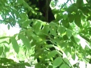 Brunette Hair engulfing in the bush