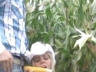 Fit Blond Honey Drilled in a Corn Field